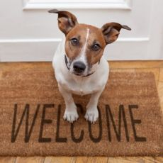 SEVEN SIGNS OF A PET FRIENDLY HOME.